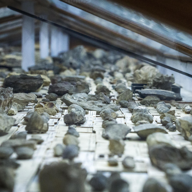 Collection paléontologie