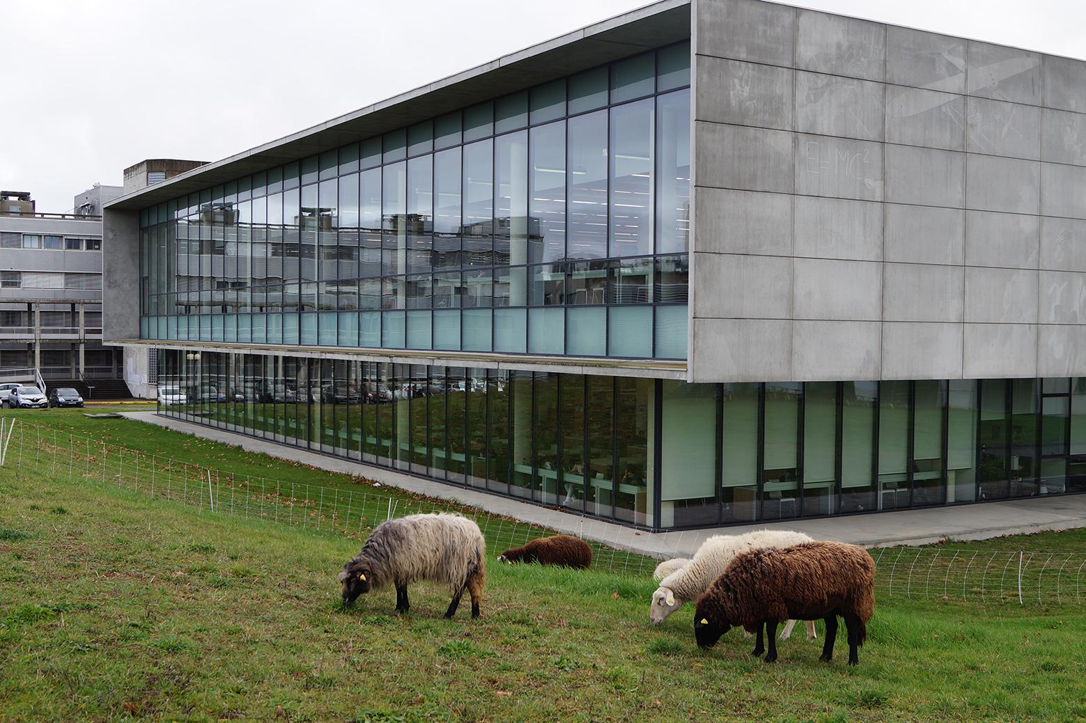 eco-paturage BU Sciences