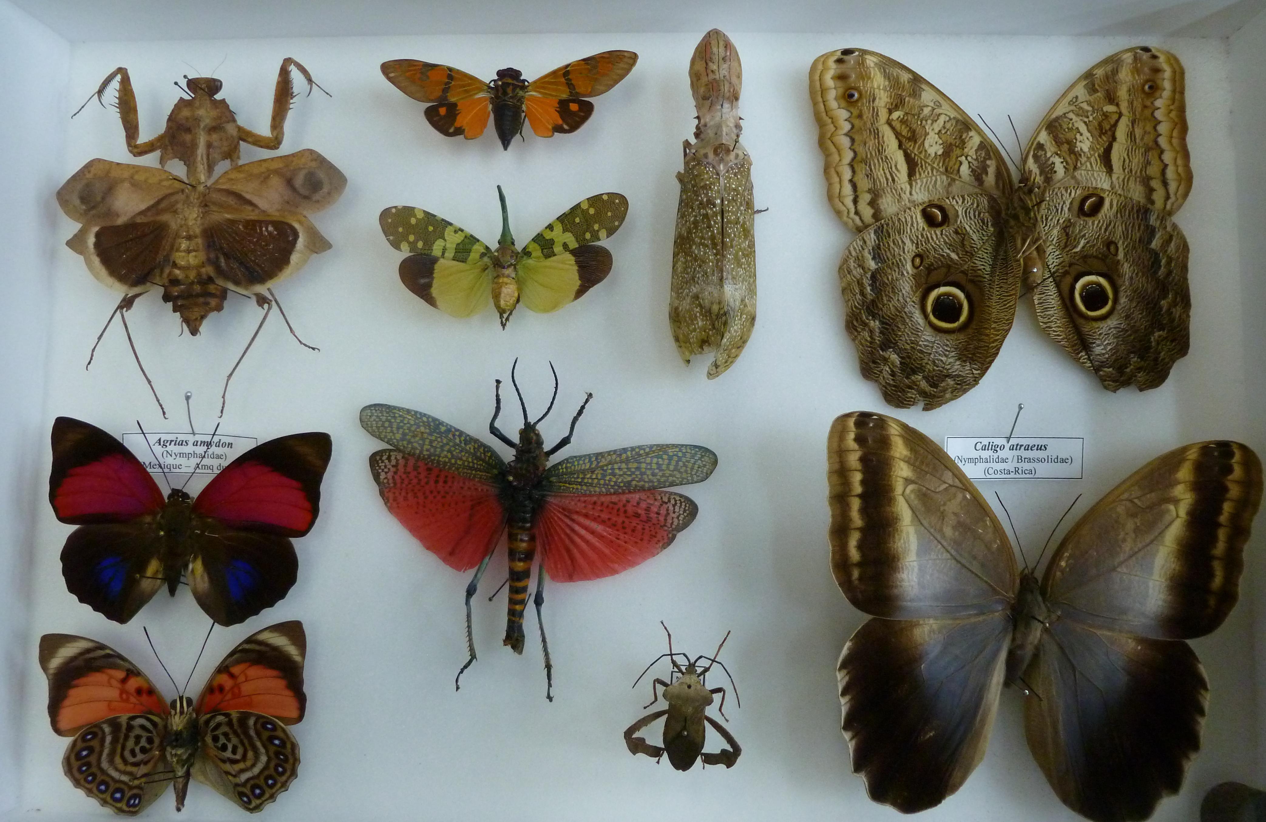 Boîte d'entomologie